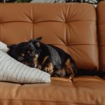 It's a Pets' Life, the Life of Luxury Pet Accessories