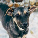Should you adopt a pet?