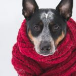 Ease Pet Athritis in winter