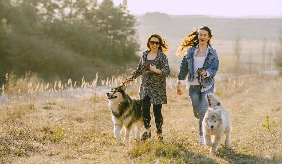 Set a Goal to Walk your Dog this Year