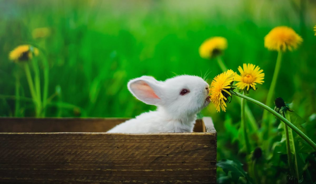 rabbit sniffing a flower